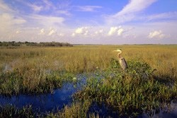Everglades Conservation Area